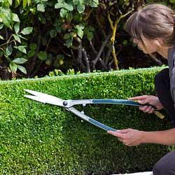 podando toal tornillera alavesa herramienta agrícola de poda y corte